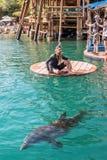 Σκόπελος δελφινιών παραλιών σε Eilat στοκ εικόνα