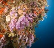 Σκόπελος και κοράλλι Μαλβίδες Στοκ φωτογραφία με δικαίωμα ελεύθερης χρήσης