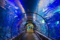 Σκόπελος καρχαριών Στοκ Εικόνες
