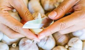Σκόρδο Χέρια γυναικών που ξεφλουδίζουν την προετοιμασία σκόρδου για το μαγείρεμα στην κουζίνα στο φρέσκο υπόβαθρο σκόρδου Στοκ Εικόνες