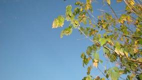 Σκόρπισμα | Φθινόπωρο | Δάσος στοκ εικόνα