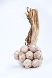 Σκόρδο απομονωμένος Στοκ εικόνα με δικαίωμα ελεύθερης χρήσης