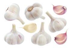 Σκόρδο που απομονώνεται στην άσπρη ανασκόπηση Συλλογή Στοκ Εικόνες