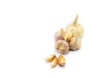 Σκόρδο που απομονώνεται στην άσπρη ανασκόπηση Στοκ Εικόνα
