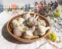 Σκόρδο στο κύπελλο αργίλου, οργανική καλλιέργεια, χορτάρια Στοκ Εικόνες