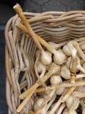 Σκόρδο, φρέσκο μακρύ σκόρδο μίσχων σε ένα καλάθι, Greenmarket, τετράγωνο ένωσης, NYC, Νέα Υόρκη, ΗΠΑ Στοκ εικόνες με δικαίωμα ελεύθερης χρήσης