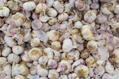 Σκόρδο, φρέσκο σκόρδο Στοκ φωτογραφία με δικαίωμα ελεύθερης χρήσης