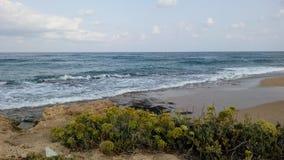 Σκύλα θάλασσας στο nahariya, Ισραήλ Στοκ φωτογραφία με δικαίωμα ελεύθερης χρήσης