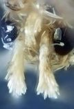 σκώρος σιταριού Στοκ εικόνα με δικαίωμα ελεύθερης χρήσης