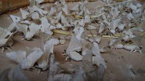 Σκώρος σκουληκιών μεταξιού Στοκ εικόνες με δικαίωμα ελεύθερης χρήσης