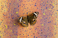 Σκώρος στο χρωματισμένο τοίχο Στοκ φωτογραφία με δικαίωμα ελεύθερης χρήσης