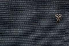 σκώρος Στοκ φωτογραφία με δικαίωμα ελεύθερης χρήσης