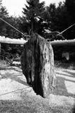Σκλάβος στη φύση Στοκ Φωτογραφίες
