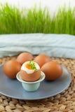 Σκληρά βρασμένα αυγά Στοκ φωτογραφία με δικαίωμα ελεύθερης χρήσης