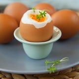 Σκληρά βρασμένα αυγά Στοκ εικόνα με δικαίωμα ελεύθερης χρήσης