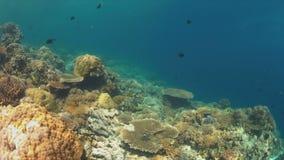 Σκληρά και μαλακά κοράλλια 4K απόθεμα βίντεο