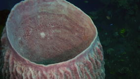 Σκληρά πετρώδη κοράλλια και ζωηρόχρωμα ψάρια στην μπλε θάλασσα απόθεμα βίντεο