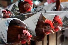 Σκληρότητα προς τα ζώα Στοκ εικόνες με δικαίωμα ελεύθερης χρήσης