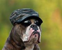 Σκληρό μπουλντόγκ στρατού στοκ φωτογραφίες