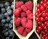 σμέουρα βακκινίων lingonberries Στοκ Φωτογραφία