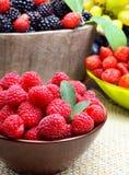 Σμέουρα, φράουλα και βατόμουρα στοκ εικόνες