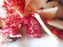 Σμέουρο με τις νιφάδες καρύδων στοκ εικόνες