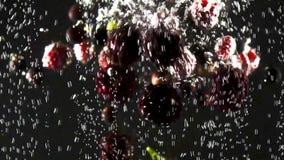 Σμέουρο, σταφίδα και βατόμουρο που περιέρχονται στο νερό με τις φυσαλίδες στο μαύρο υπόβαθρο Φρέσκα μούρα στο νερό απόθεμα βίντεο