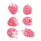 Σμέουρο σχεδίων που απομονώνεται στο άσπρο υπόβαθρο χέρι φρούτων που σύρεται Στοκ φωτογραφία με δικαίωμα ελεύθερης χρήσης