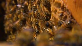 Σμήνος των μελισσών σε μια κηρήθρα φιλμ μικρού μήκους