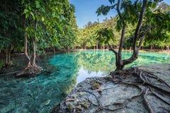 Σμαραγδένια λίμνη σε Krabi Ταϊλάνδη Στοκ Εικόνες