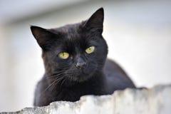 Σοβαρή γάτα που κοιτάζει κάτω Στοκ φωτογραφία με δικαίωμα ελεύθερης χρήσης