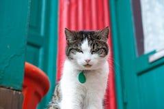 Σοβαρή γάτα σε ένα φωτεινό υπόβαθρο Στοκ Εικόνες