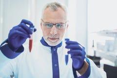 Σοβαρός επιστήμονας που κοιτάζει επίμονα στο βιολογικό προϊόν Στοκ Εικόνα