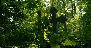 Σοβαρός σταυρός μεταξύ της πολύβλαστης πρασινάδας απόθεμα βίντεο