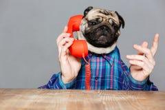 Σοβαρό άτομο με την επικεφαλής ομιλία σκυλιών μαλαγμένου πηλού στο τηλέφωνο Στοκ Εικόνα