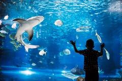 Σοβαρό αγόρι που κοιτάζει στο ενυδρείο με τα τροπικά ψάρια στοκ φωτογραφίες με δικαίωμα ελεύθερης χρήσης