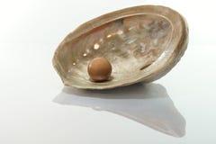 Σοκολάτα πολυτέλειας στο θαλασσινό κοχύλι μαργαριταριών Στοκ Εικόνα