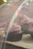 Σοκολάτα cupcakes που διακοσμείται με την κρέμα μούρων Στοκ φωτογραφία με δικαίωμα ελεύθερης χρήσης