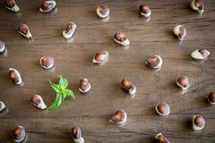 Σοκολάτες θαλασσινών κοχυλιών Στοκ Φωτογραφία