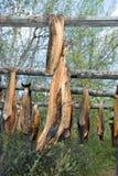 σολομός ξήρανσης της Αλά&sigma Στοκ Φωτογραφίες