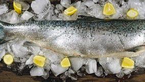 Σολομός, πάγος, κατάστημα ψαριών, ψάρια, τρόφιμα, παγωμένα, θαλασσινά, παραγωγή, υγιεινή, κατάστημα, υγεία, θάλασσα, ωκεανός, επί στοκ φωτογραφία