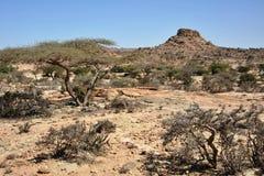 Σομαλικό ladscape Στοκ φωτογραφίες με δικαίωμα ελεύθερης χρήσης
