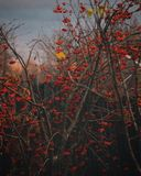 σορβιά το Νοέμβριο στοκ φωτογραφία με δικαίωμα ελεύθερης χρήσης
