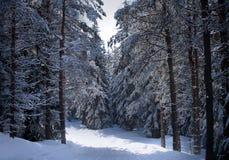 σουηδικός χειμώνας στοκ φωτογραφία με δικαίωμα ελεύθερης χρήσης