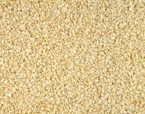 σουσάμι σπόρων στοκ φωτογραφία με δικαίωμα ελεύθερης χρήσης