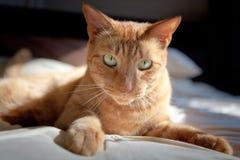 Σοφό γατάκι Στοκ Εικόνες