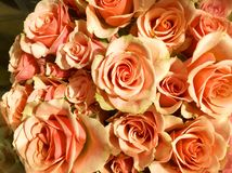 Σολομός και πράσινη ανθοδέσμη των τριαντάφυλλων για σας Στοκ εικόνες με δικαίωμα ελεύθερης χρήσης