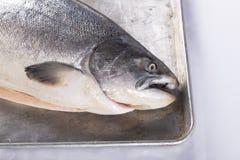 Σολομός σε ένα πιάτο Στοκ φωτογραφία με δικαίωμα ελεύθερης χρήσης