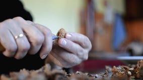 Σπάζοντας και καθαρίζοντας ξύλα καρυδιάς με χέρια φιλμ μικρού μήκους