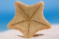 Σπάνιος σε βαθιά νερά αστερίας με τον ωκεανό, στην άσπρη παραλία άμμου, ουρανός και Στοκ Φωτογραφία